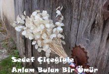 Photo of Sedef Çiçeğiyle Anlam Bulan Bir Ömür