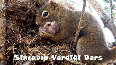 Photo of SİNCABIN VERDİĞİ DERS