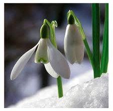 Photo of Kardelen ve hercai çiçeğinin öyküsü