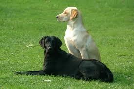 siyah ve beyaz köpek