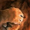 utangac aslan resmi1