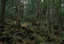 """Photo of Yaşanmış Gerçek Bir Korku Hikayesi Daha; """"Ormanın Sırrı"""" (PART III)"""