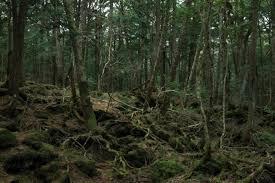 """Photo of Yaşanmış Gerçek Bir Korku Hikayesi Daha; """"Ormanın Sırrı"""" (PART V)"""