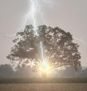 ağaca düşen şimşek