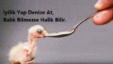 Photo of Hikaye Oku: Balık Bilmezse Halık Bilir