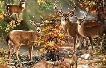 """Photo of Çok Güzel Hikaye, Eğitici Hikaye, Ders Veren Hikaye; """"Orman ve Hayvanlarının Birliği"""""""