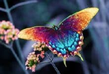 """Photo of Çok Güzel Bir Hikaye Daha; """"Bir Kelebeğin Peşinden"""""""